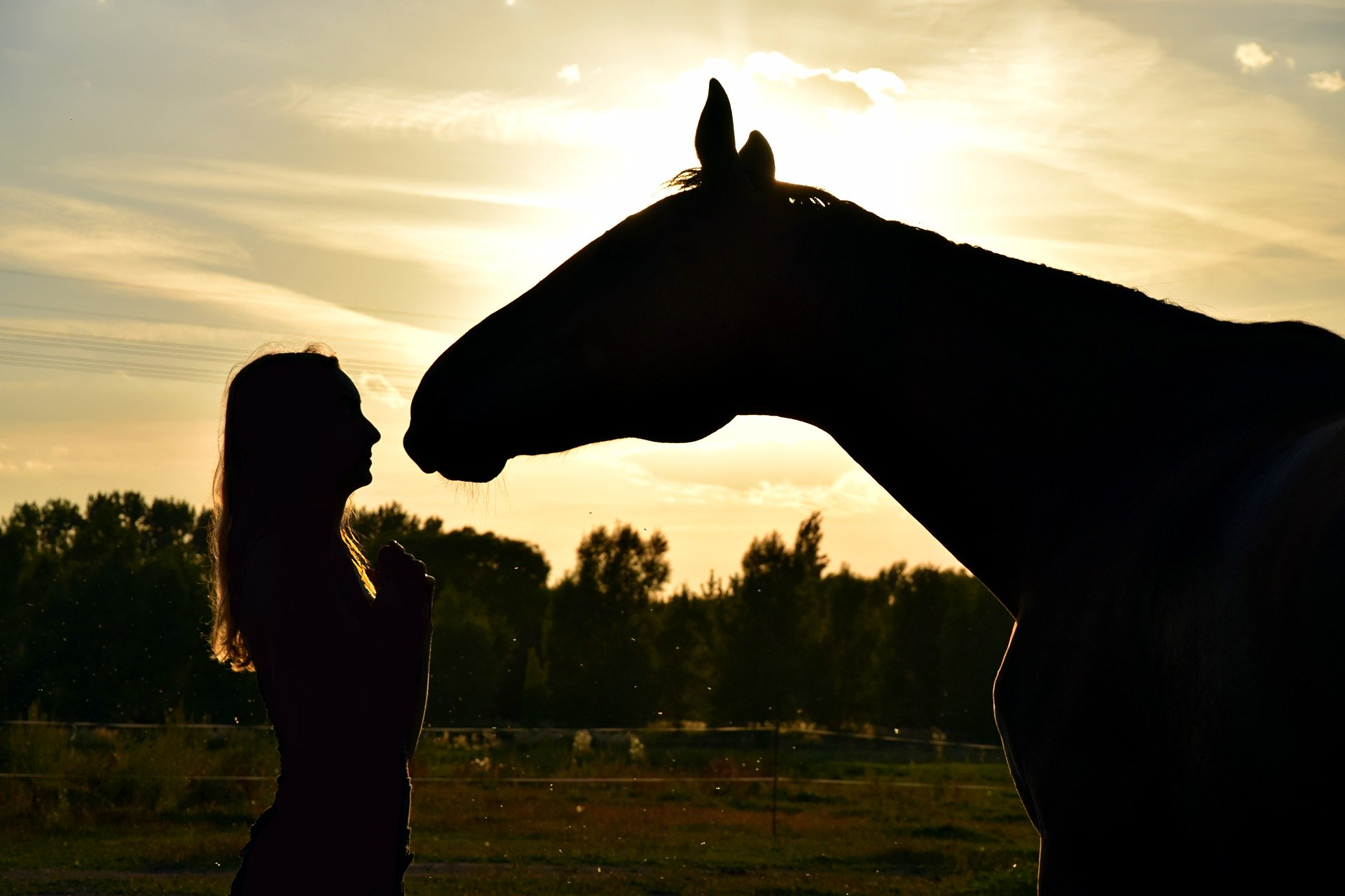 SEJOURS MEDITATION ANIMALIERE UNE FEMME CARESSEE UN CHEVAL